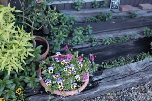 Amieseアミーゼ春の花壇